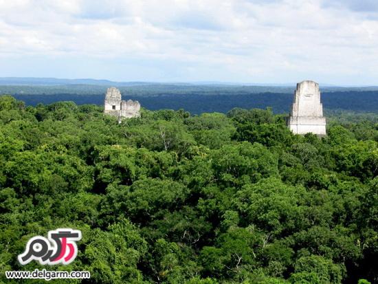 جنگل زیبا و پر رمز و راز تیکال در گواتمالا را بیشتر بشناسید+تصاویر