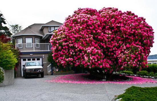 معروف ترین و خاص ترین درخت های سراسر جهان+تصاویر دیدنی