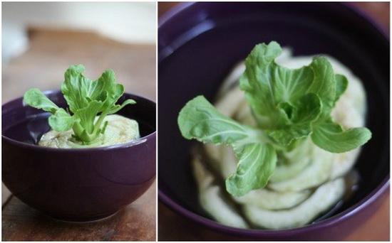 آموزش کاشت سبزیجات در خانه