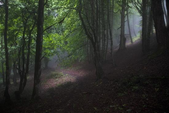 آشنایی با جنگل رویایی الیمستان درآمل