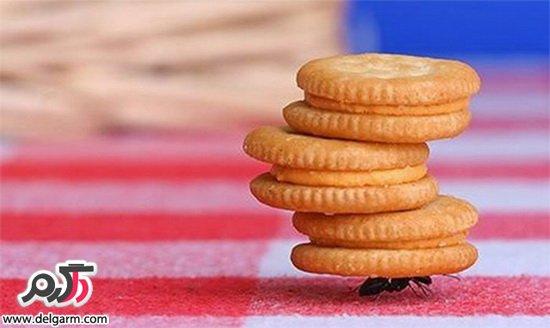 از بین بردن مورچه