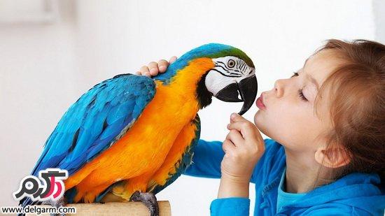 روش های نگهداری از پرندگان