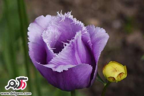 گل های رنگارنگ طبیعت اسکاتلند