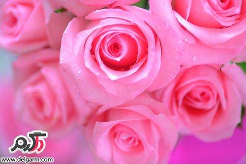 عکس جذاب گل