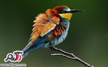 تصاویری از زیباترین پرندگان جهان