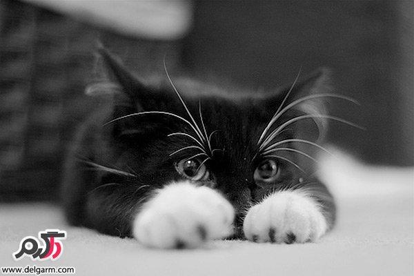 گربه هاي ملوس و با مزه