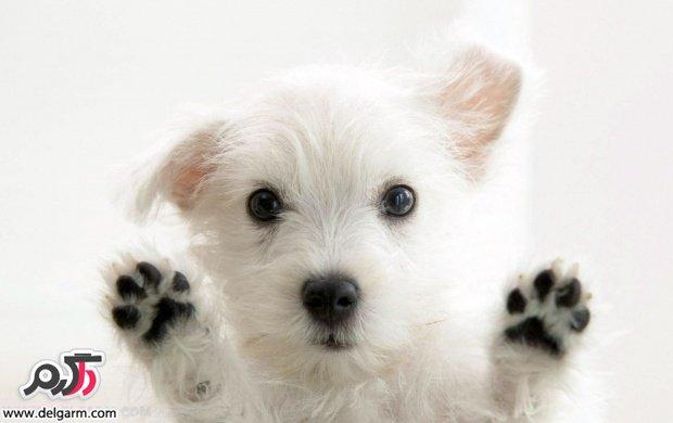 سگ ها سري سوم
