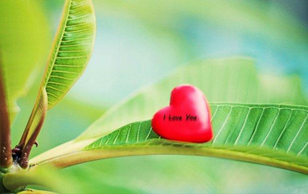 کارت پستال های عاشقانه برای عید نوروز