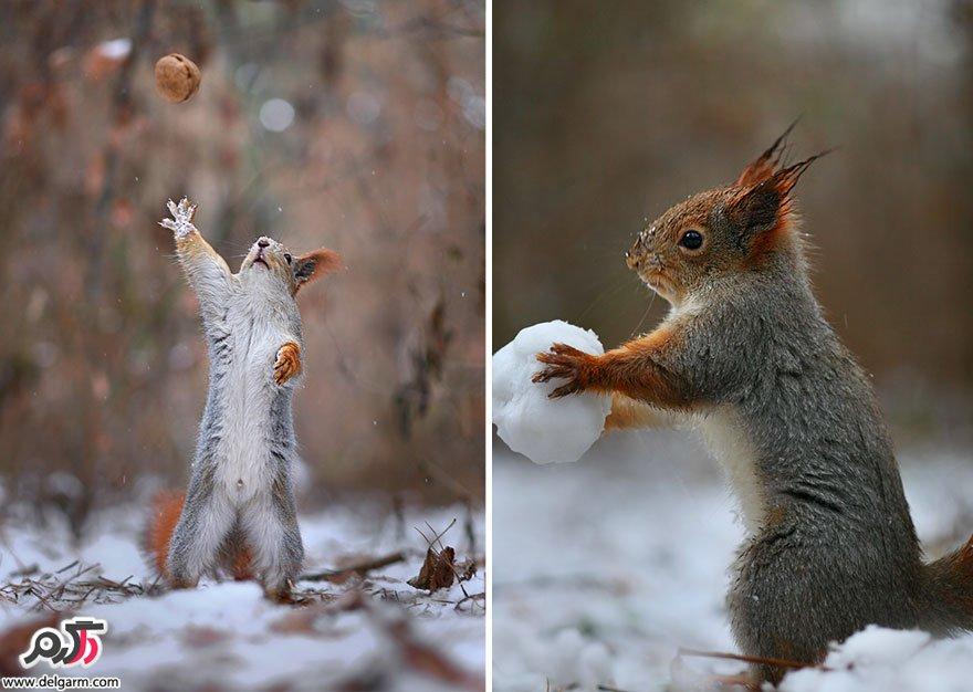 سنجاب های بازیگوش