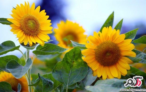 تصاویری زیبا از گل های زیبا سری 18