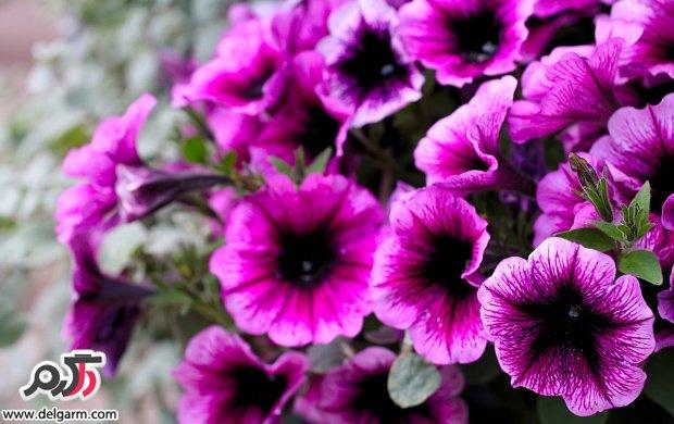 تصاویری زیبا از گل های زیبا سری 19