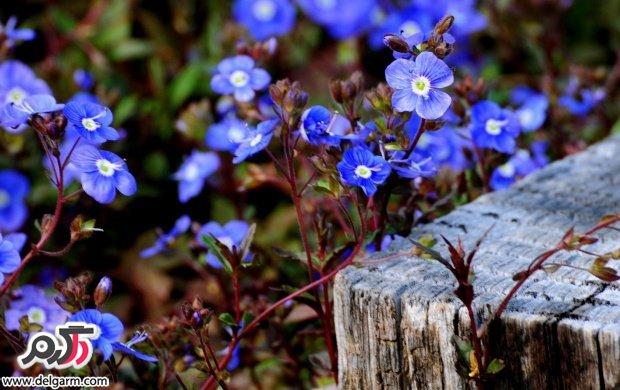 تصاویری زیبا از گل های زیبا سری 20