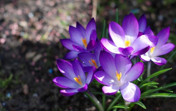 تصاویری زیبا از گل های زیبا سری 21
