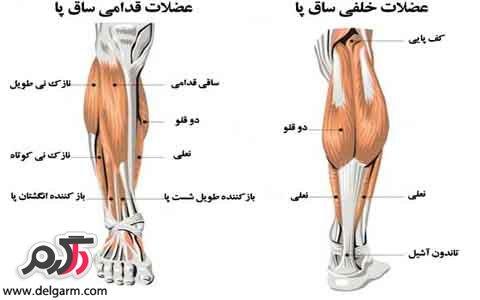 علائم و نشانه های گرفتگی عضلات ساق پا