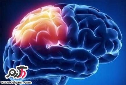 مغز انسان انرژی خوار است؟