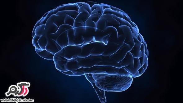 مغز کاملا تکامل نیافته است