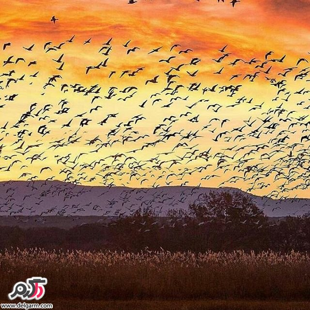 زیباترین تصاویر از طبیعت مهر 1395