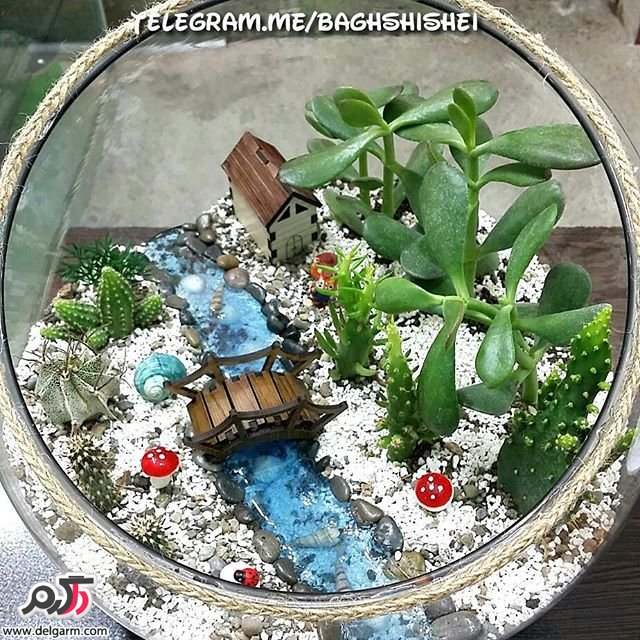 نمونه های زیبا و شیک از کاکتوس تزئینی