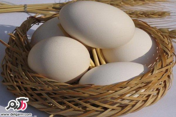 راه های شناسایی تخم مرغ فاسد