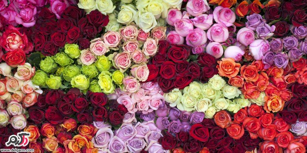 مناسب ترین رنگ گل برای هدیه دادن