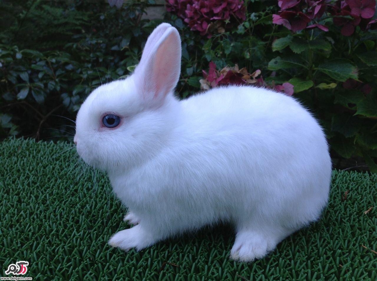 خرگوش و مراقبت از خرگوش