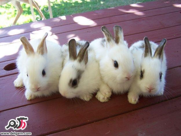 چگونه مراقب خرگوشمان در منزل باشیم؟!