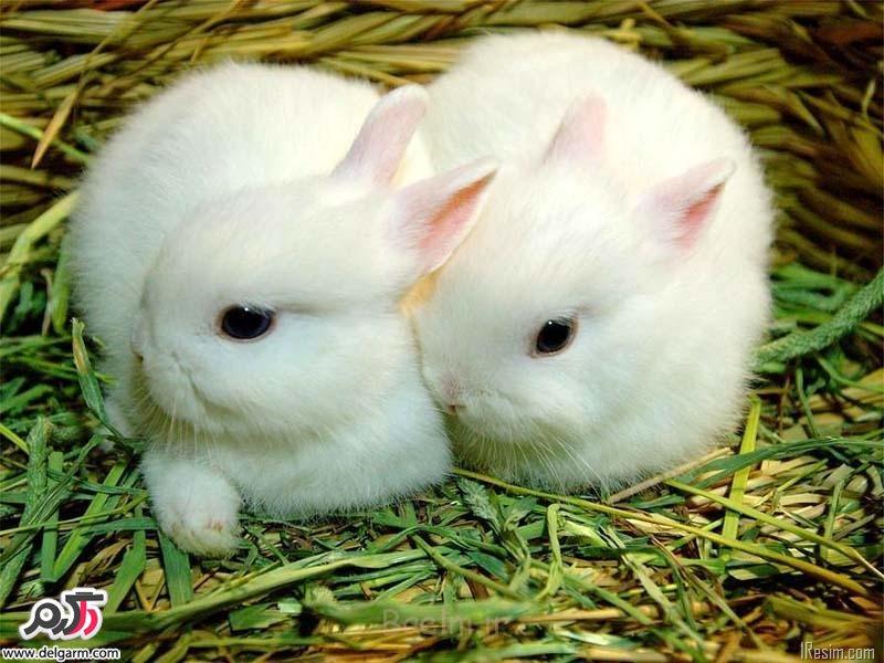 آموزش نگهداری درست خرگوش