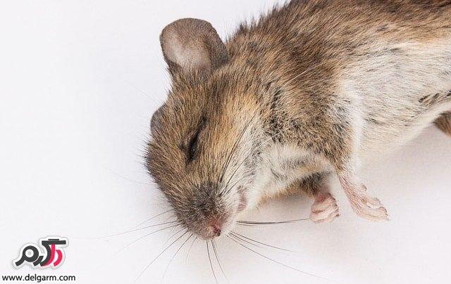 موشها شناخت و روش مبارزه با آنها