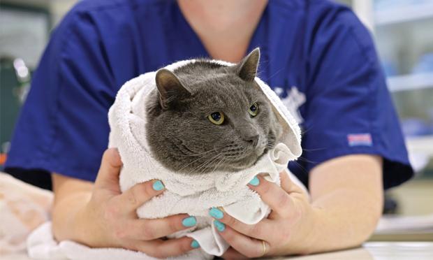 مراقبت از گربه ها – چگونه گربه ها را تربیت کنیم؟