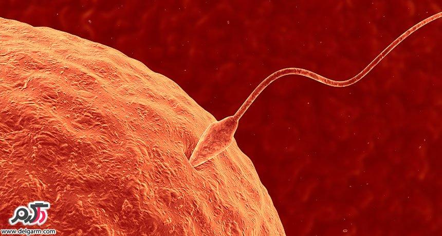 اسپرم تا چند روز زنده است؟
