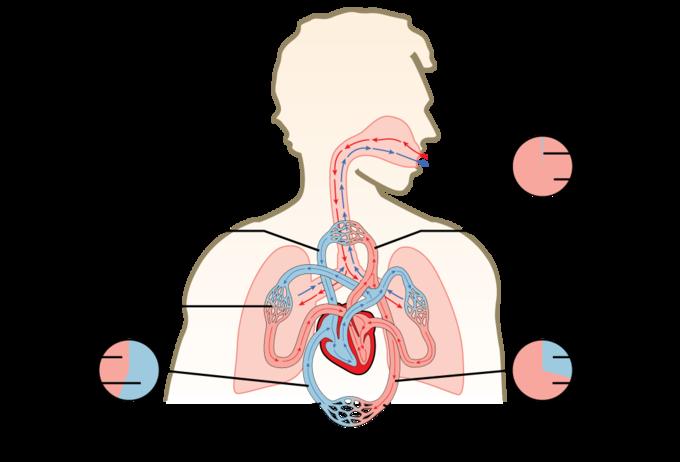 بورس بدن چیست؟