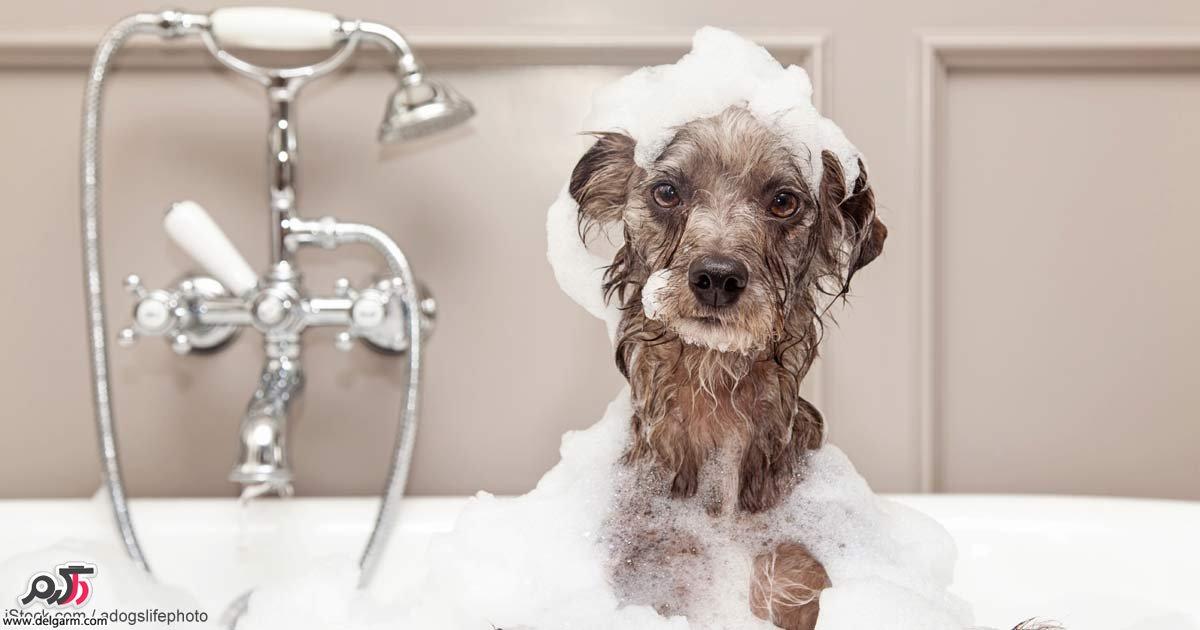 آموزش شست و شو (حمام) سگ