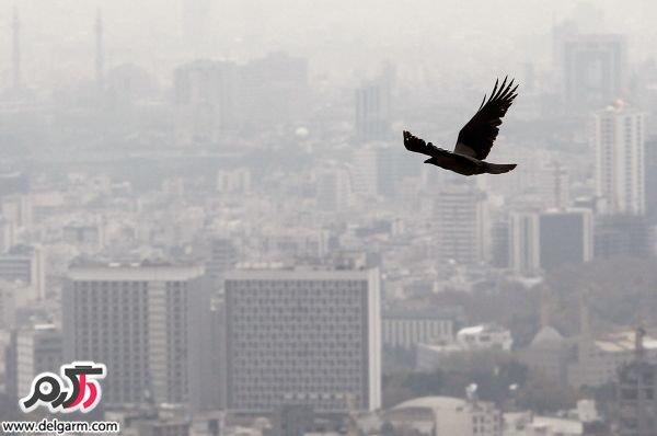 هنگام آلودگی هوا چه کنیم؟