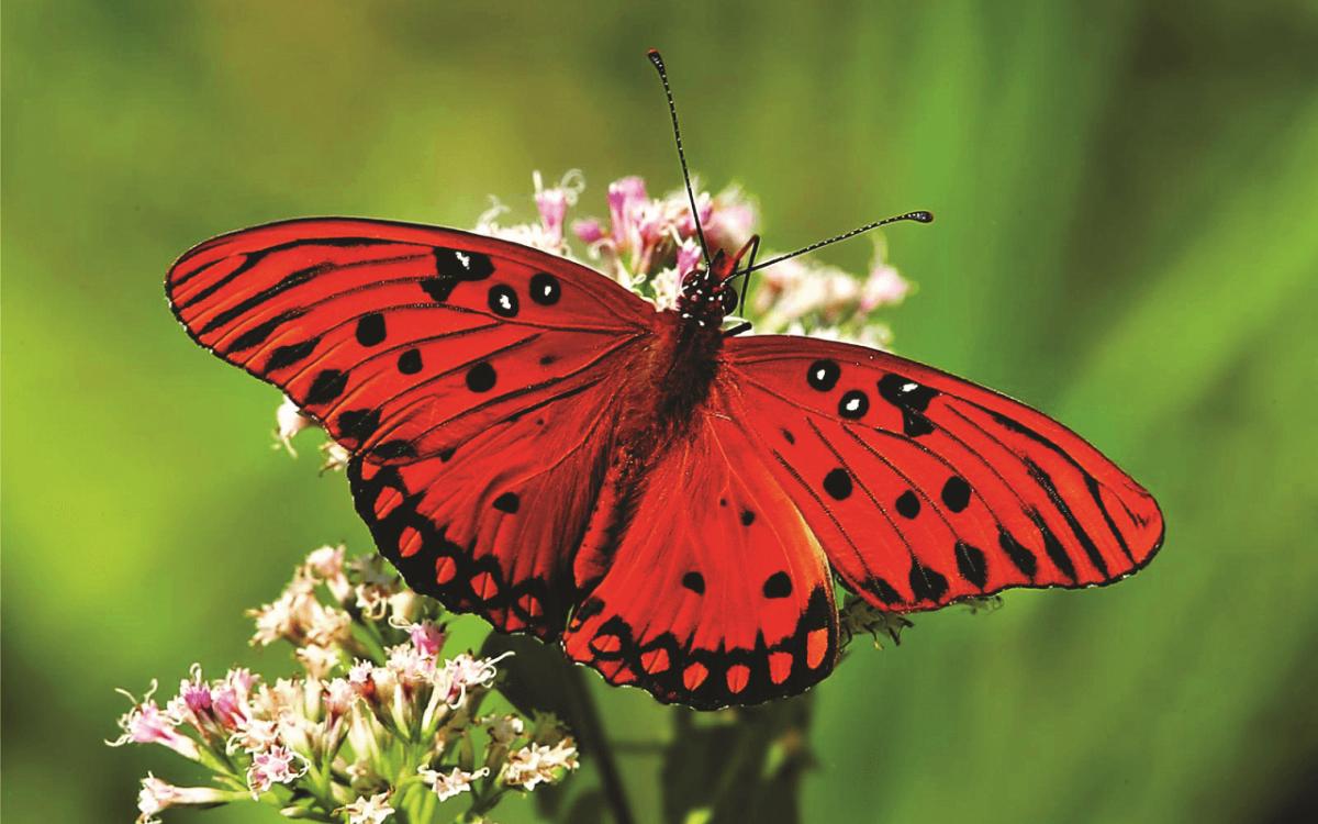 پارک پروانه های کوالالامپور