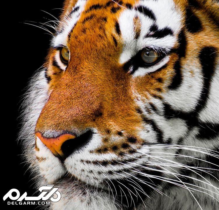 عکس های زیبا از حیوانات
