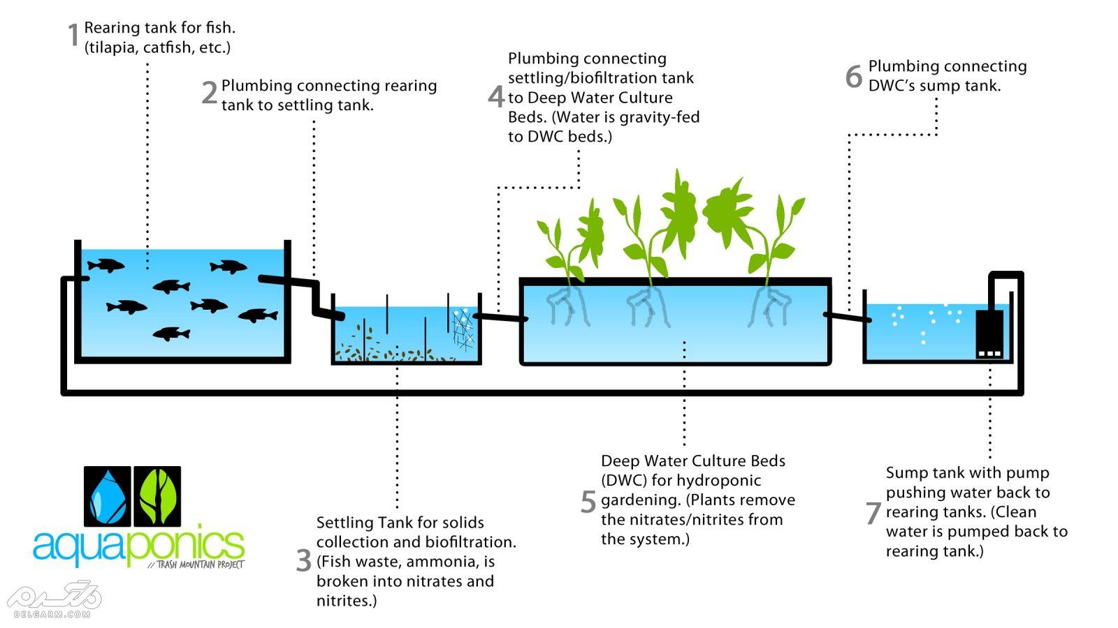 طرح توجیهی آکواپونیک ( Aquaculture  )