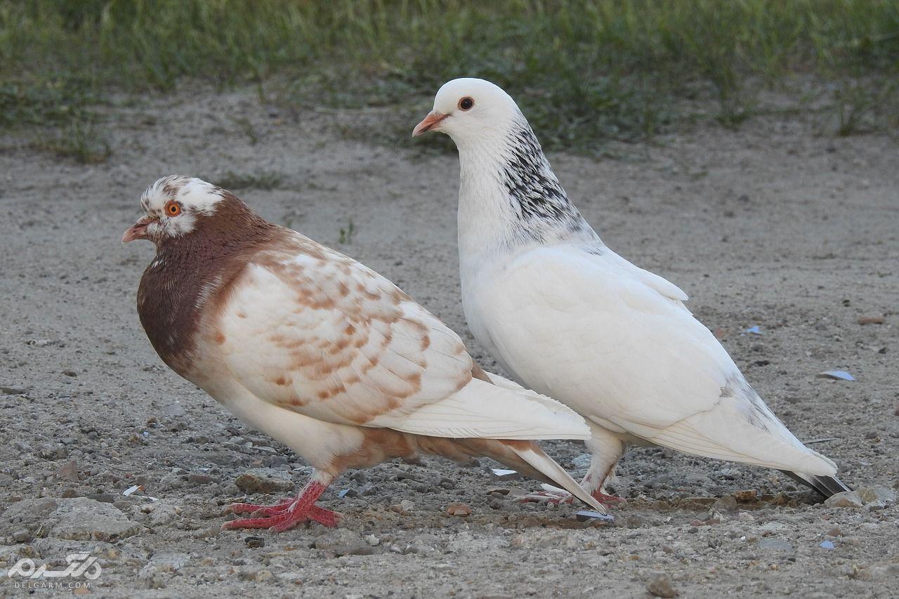 علل تشخیص و درمان فوری اسهال در پرندگان