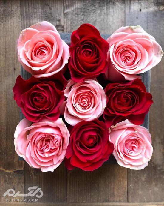 تزیین دسته گل رز - آموزش پیچیدن دسته گل رز - تزیین دسته گل ساده