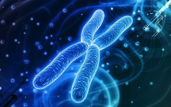 DNA حیوانات در برابر گیاهان