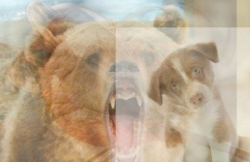 شخصیت شناسی حیوان درون