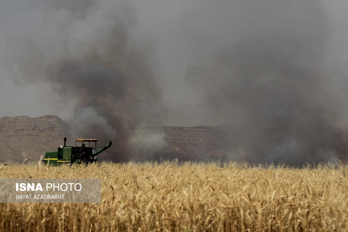 آتش سوزی در مزارع گندم کوهدشت