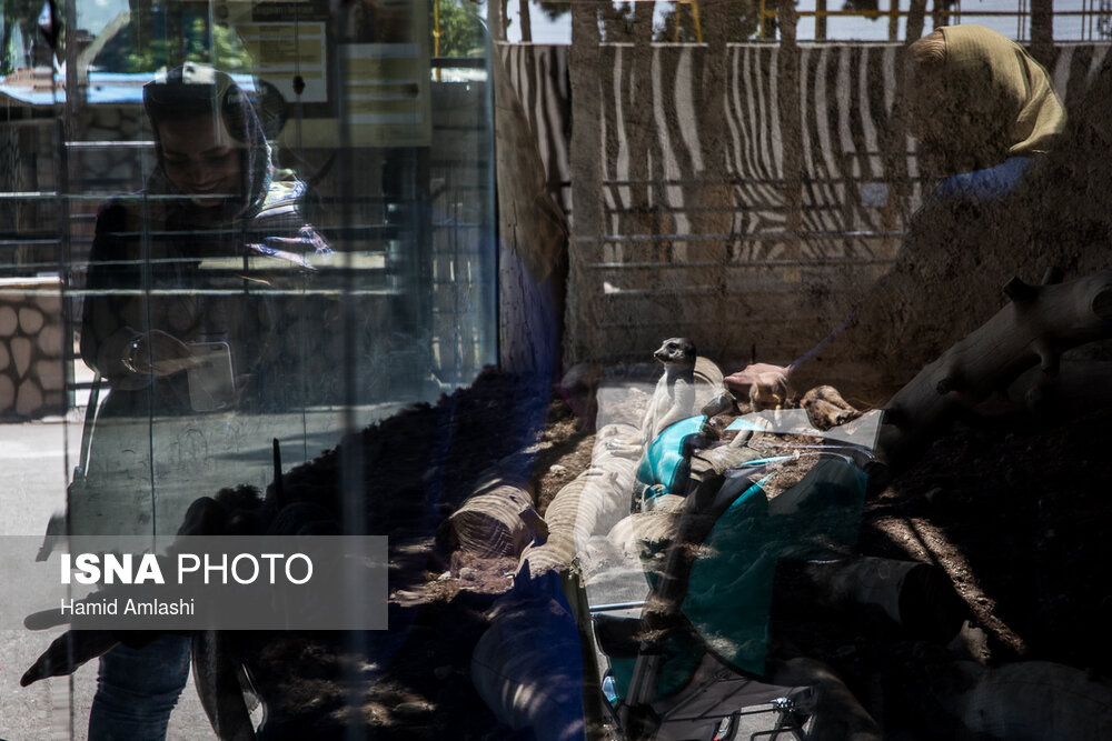 مرگ تلخ دختر 15 ساله در دیواندره+ عکس