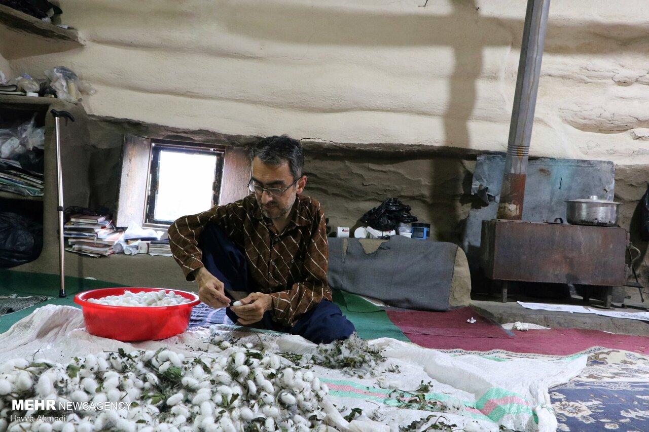 کرم ابریشم - نوغان Silkworm breeding