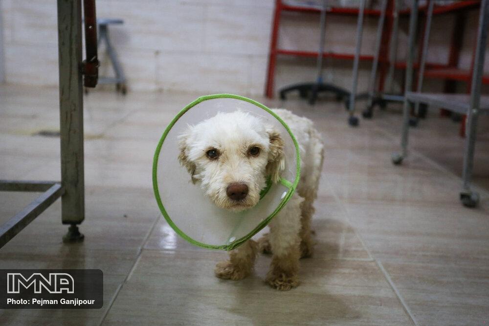 تصاویر مرکز ساماندهی سگهای بی سرپرست در اصفهان