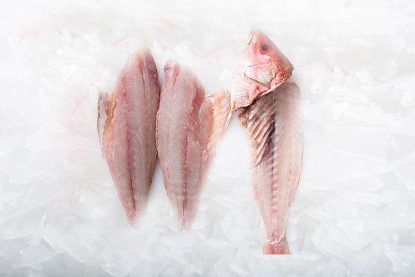 ماهی سرخو تازه  و فیله شده