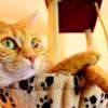 علل ، تشخیص و درمان سرطان استخوان در گربه ( استئوسارکوم  )