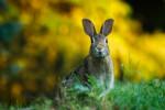 معرفی ۱۲ بیماری خطرناک که جان خرگوش را به خطر می اندازد