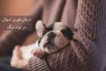 اسهال در توله سگ :: علل ، تشخیص و درمان فوری