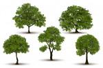 تعبیر خواب درخت : ۱۱۸ نشانه و تفسیر دیدن درخت در خواب