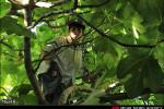 تصاویر انجیر، درخت محبوب خانه های رومشگان